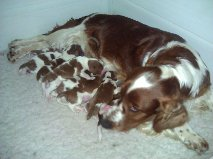 kizzy with new born babies