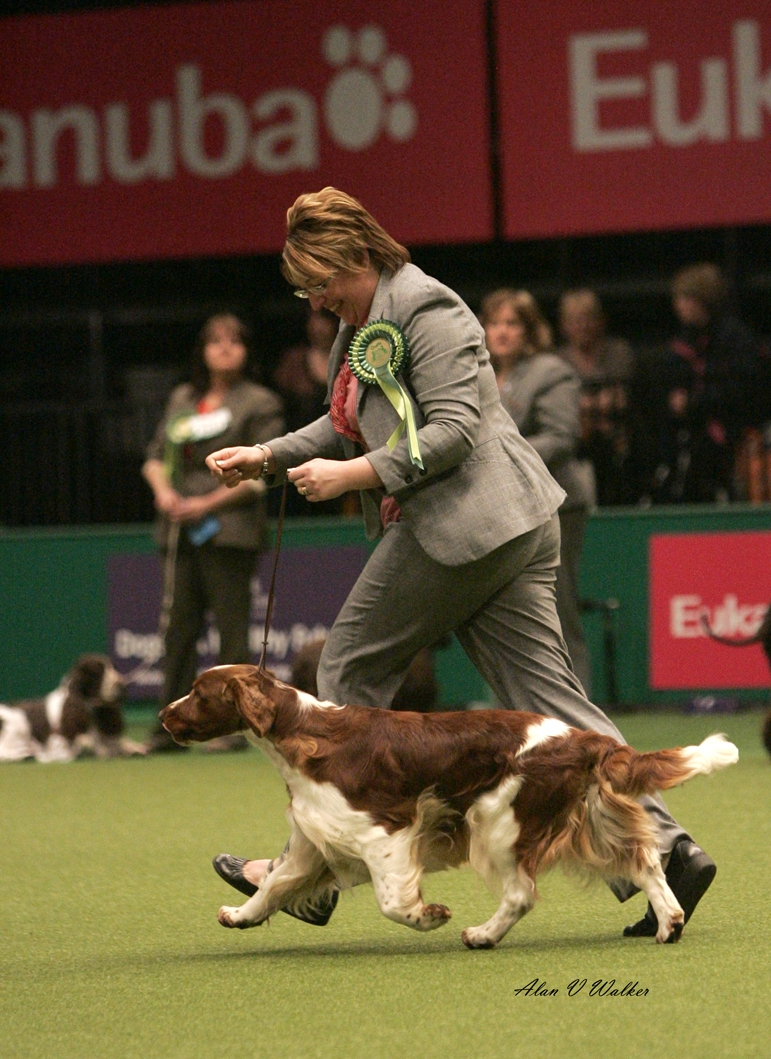 Timelord, Gundog Group Crufts 21012